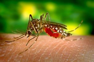 08-26_dia-internacional-contra-el-dengue