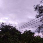 Caída de árbol deja sin fluido eléctrico zonas rurales de Sucre y Bolívar